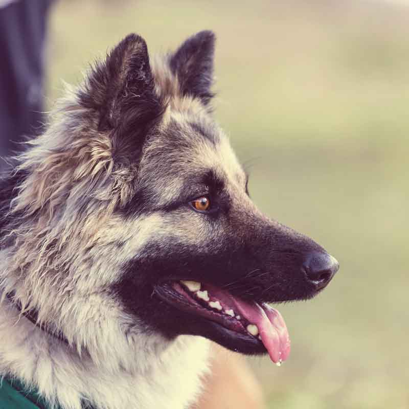 eco-dog-beegreen